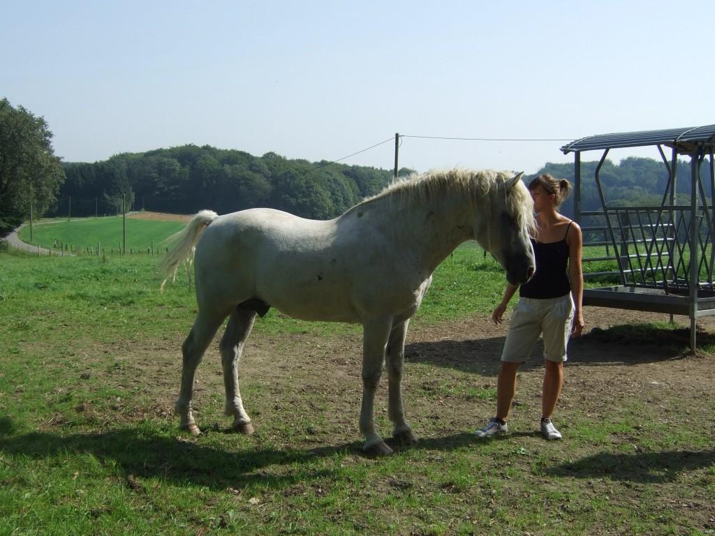curly horse kaufen
