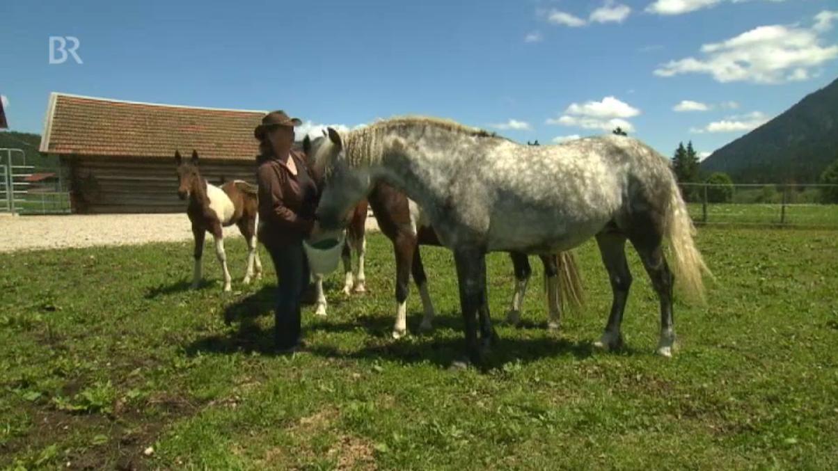 Claudia mit den Curly Horses vom Isarhof