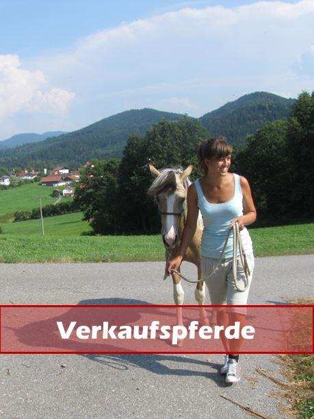 Forum Verkaufspferde